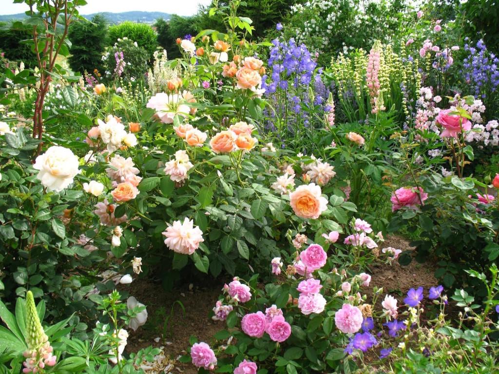Comment créer son propre jardin spontané ?2