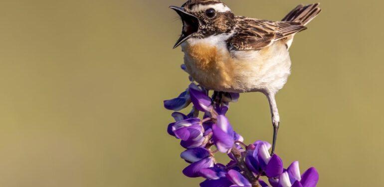 oiseau dans un jardin