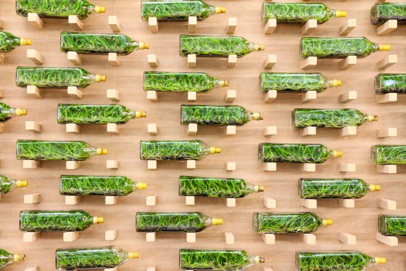 mur vegetal diy